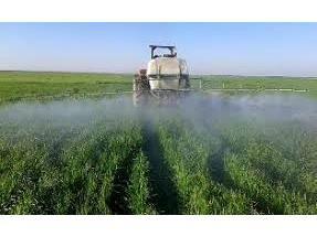 130 هزار هکتار مزارع گندم مازندران مبارزه شیمیایی شد