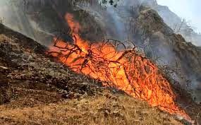 ۱۵هکتار از جنگلهای مانه و سملقان در آتش غفلت سوخت