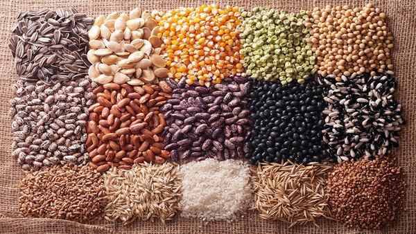 تولید بیش از یکسوم بذر محصولات زراعی در سال توسط شبکه تعاونی روستایی