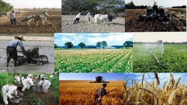 ۱۸ هزار و ۷۱۴ شغل در بخش کشاورزی خراسان شمالی ایجاد شد