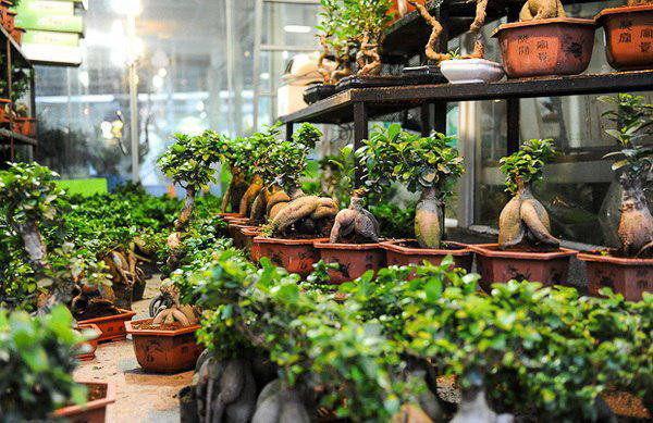 واردات گل و گیاه به کشور غیرقانونی است