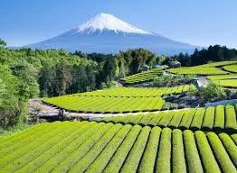تخصیص بودجه کمکی ژاپن برای حمایت از کشاورزان