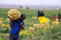 توسعه زیرساختهای کشاورزی با اعتبار ۲ هزار میلیارد تومانی دولت تدبیر و امید/ تولید ۲.۹ میلیون تن محصولات کشاورزی در هرمزگان