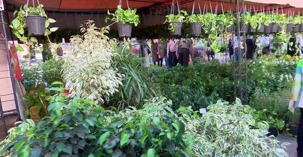 افتتاح دومین نمایشگاه داخلی گل و گیاه در پاکدشت