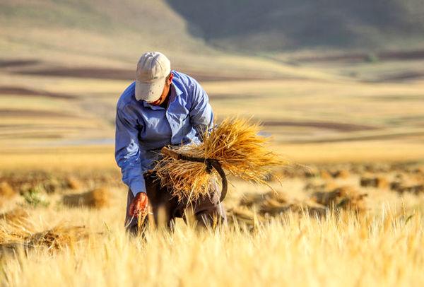افزایش ضریب نفوذ دانش و توانمندسازی بهرهبرداران بخش کشاورزی