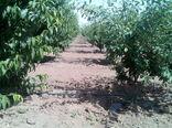 توسعه ۱۱۰۰ هکتاری باغهای میوه در قزوین