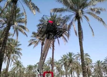 نخستین دستگاه بالابر مکانیزه خرماچین کشور در بوشهر رونمایی شد