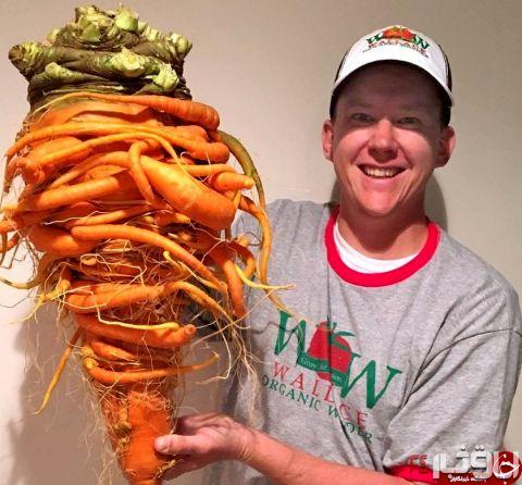 بزرگ ترین هویج جهان در دستان مرد سبز انگشتی