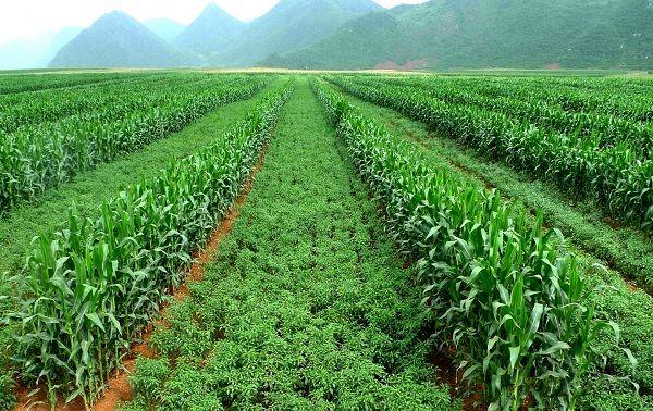 کمک به کشاورزان چینی برای مقابله با فرسایش خاک و افزایش سود آن ها