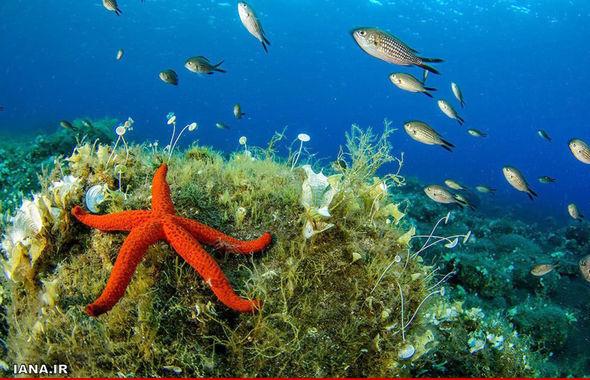 جنگلهای مرجانی در عمق آبهای سیسیل