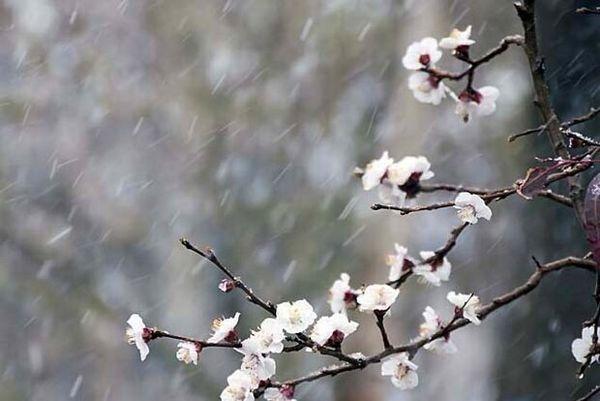 خطر سرمازدگی باغات، گلخانهها و مرغداریها در چهارمحال و بختیاری
