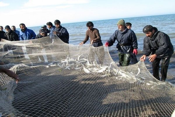 ۶۴۴۵ تُن ماهی از منابع آبی آذربایجانغربی صید شد