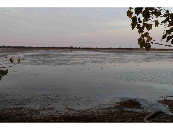 تامین آب 7500 هکتار شالیزار محمودآباد از آببندان ها