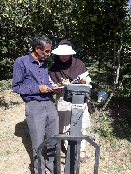 کیل گیری سیب درختی از باغ 13هکتاری در دماوند