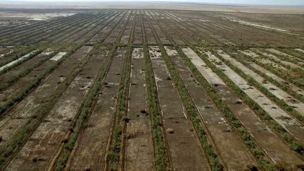 نهالکاری ۲۴ هزار و ۵۷۱ هکتار از اراضی  خوزستان برای مقابله با گرد و غبار