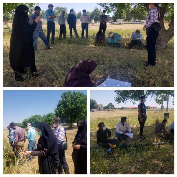 برنامه آموزشی مدرسه در مزرعه در سایت قوشچی قزوین برگزار شد