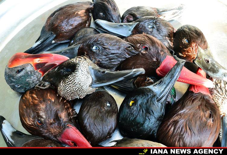 عکس روز:نسلکشی پرندگان مهاجر