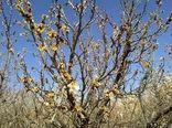 حوادث طبیعی هزار و ۷۷۰ میلیارد ریال به حوزه کشاورزی شیروان خسارت زد