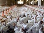 آنفولانزای فوق حاد پرندگان به استان خراسان شمالی سرایت نکرده است