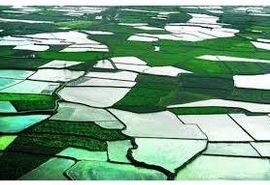 1000 قطعه زمین کشاورزان سوادکوهی در سامانه سیاک ترسیم شد