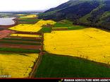 اصلاح بافت خاک زراعی با کشت کلزا