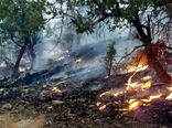 لزوم اعزام بالگردهای آبپاش برای مهار آتشسوزی در جنگلهای کهگیلویه و بویراحمد