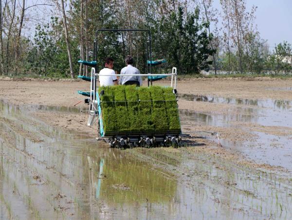 پیشبینی 100 هزار هکتار کشت مکانیزه برنج در مازندران