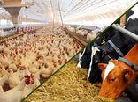 جزییات شرایط تخصـیص نهادههای دامی به مراکز پرورش مرغ تخمگـذار و گاوداریهای صـنعتی