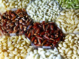 تولید بذر مهمترین مزیت بخش فناوری کشاورزی در اصفهان است