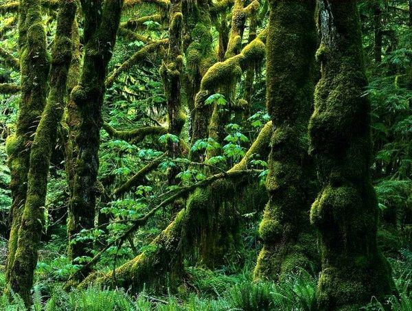 دستورالعمل نحوه حفاظت از جنگلهای هیرکانی ابلاغ شد