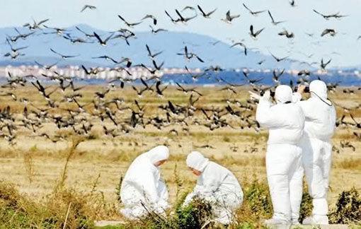 آنفلوآنزای فوق حاد پرندگان در آذربایجان شرقی وجود ندارد