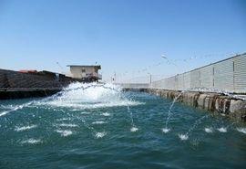 تولید 250 تن انواع ماهیان سردابی و گرمابی