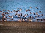 برای حفظ پرندگان همصدا شویم