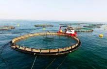 وجود ظرفیت ۶۰ هزار تنی تولید ماهی در قفس
