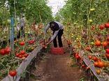 ایجاد 11 هکتار گلخانه در همدان تا پایان سال جاری