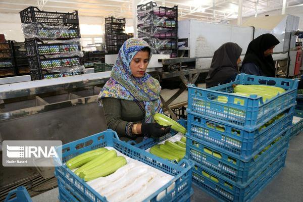۵۲۹ هزار تن محصول کشاورزی از کردستان صادر شد