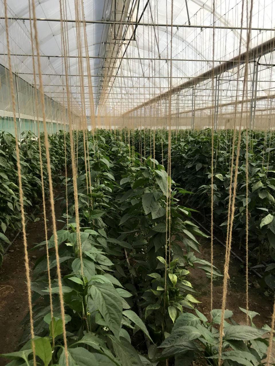 گام های بلند بانک کشاورزی در استان هرمزگان