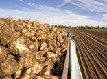 خوداتکایی ۸۵ درصدی ایران در تولید شکر