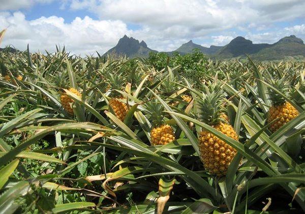 تأمین مالی طرحهای آبیاری برای کشاورزان آناناسکار