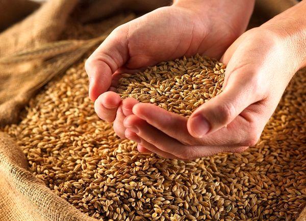 ادعای وجود ناخالصی نامتعارف در محموله های گندم کذب است