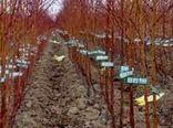 پست قرنطینهای گیاهی در پاسگاه سیرچ از اواخر بهمن ماه ایجاد میشود