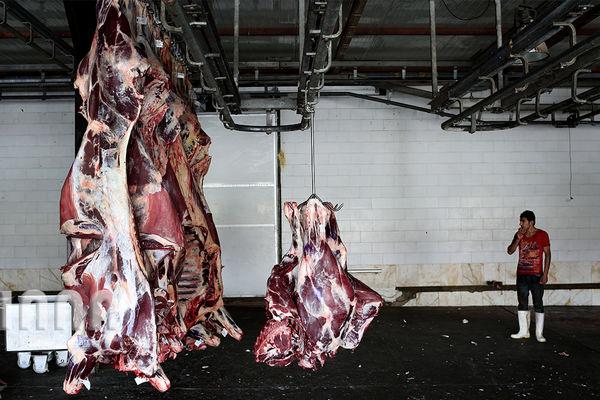 عرضه گوشت گوسفند خوب نیست