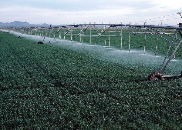 آغاز اصلاح طرحهای کشت شبکه آبیاری