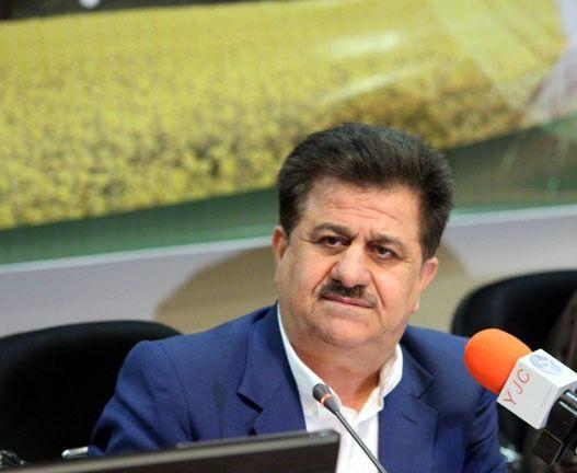 باز هم عطر خوش شالیزارهای خوزستان