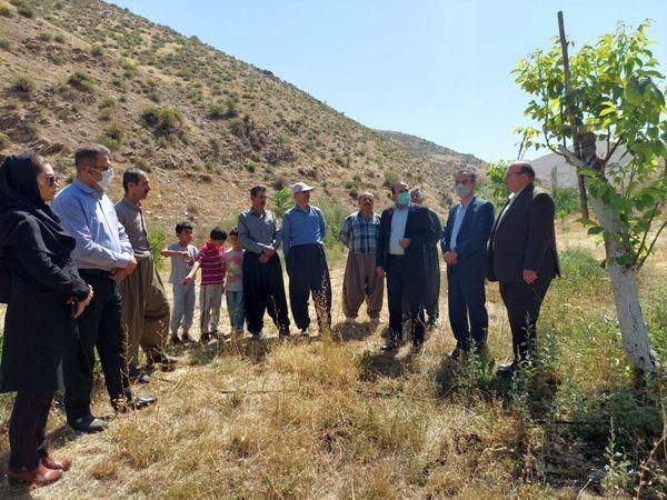 پروژه اصلاح ۱۵ هکتار از باغات قدیمی گردو در بانه بهره برداری شد