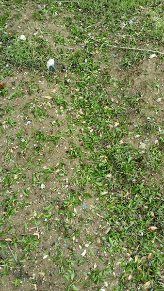 بارش تگرگ در شهرستان سیرجان بیش از 59 میلیارد تومان خسارت به بخش کشاورزی وارد کرد