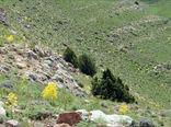 ابلاغ سیاستهای کلی حفاظت و بهرهبرداری محصولات فرعی منابع طبیعی