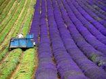 گسترش مزارع گیاهان دارویی برای افزایش نرخ رشد ناخالص ملی