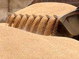 32 هزار و 500 تن گندم در سیلوهای چهارمحال و بختیاری ذخیره شد