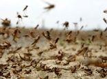 مبارزه با آفت ملخ صحرایی در سطح ۸۴۴۰ هکتار از اراضی انجام شد